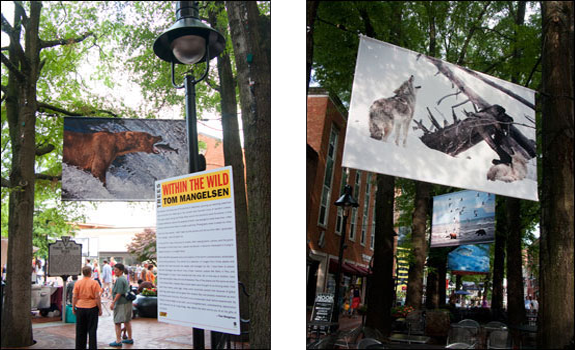 (left) Within the Wild. Share a meal with a grizzly bear. Courtesy, © Susan Katz 2009, (right) An image of howling wolves by Tom Mangelsen hang above a sidewalk café, as part of The TREES exhibit, Within the Wild. Courtesy, © Susan Katz 2009