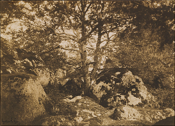 Gustave Le Gray (French, 1820–1884) [Oak Tree and Rocks, Forest of Fontainebleau], 1849–52 Salted paper print from paper negative, 25.2 x 35.7 cm (9 15/16 x 14 1/16 in.) The Metropolitan Museum of Art, Purchase, Jennifer and Joseph Duke and Lila Acheson Wallace Gifts, 2000 (2000.13) Image © The Metropolitan Museum of Art, New York